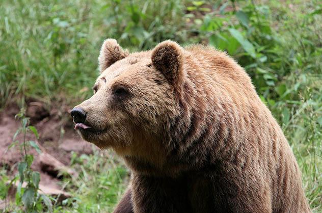 Красивые и удивительные картинки животных - животный мир, фото 6