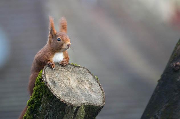Красивые и удивительные картинки животных - животный мир, фото 8
