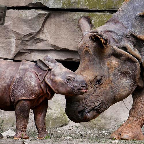 Красивые и удивительные картинки животных - животный мир, фото 9