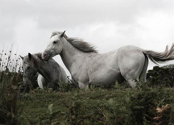 Красивые картинки животных - удивительные, прикольные, интересные 1