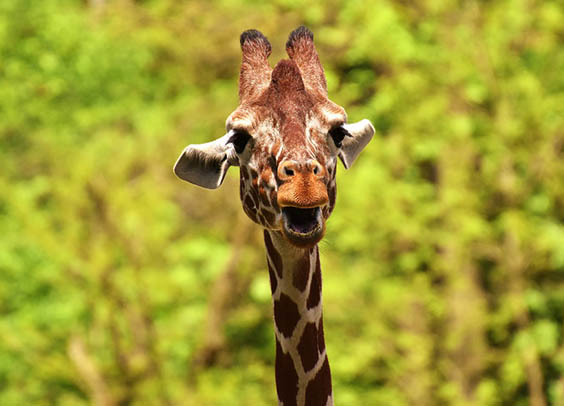 Красивые картинки животных - удивительные, прикольные, интересные 10