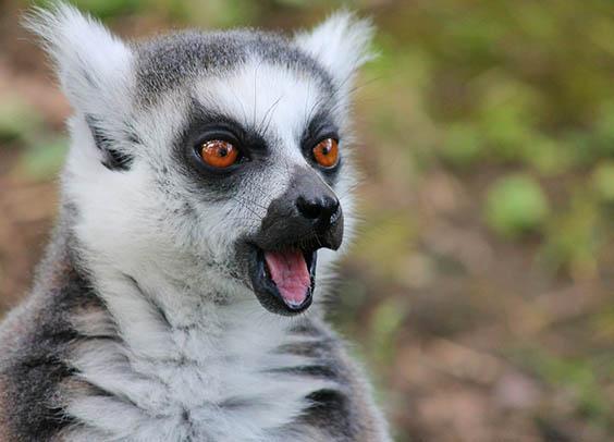 Красивые картинки животных - удивительные, прикольные, интересные 13