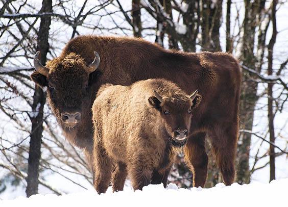 Красивые картинки животных - удивительные, прикольные, интересные 2