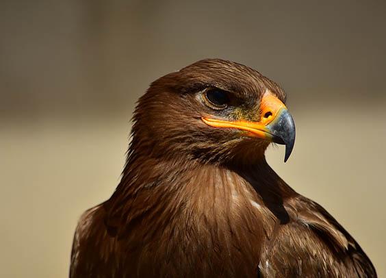 Красивые картинки животных - удивительные, прикольные, интересные 3
