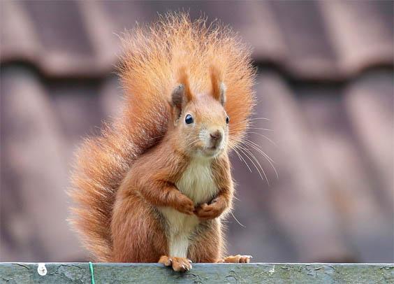 Красивые картинки животных - удивительные, прикольные, интересные 4
