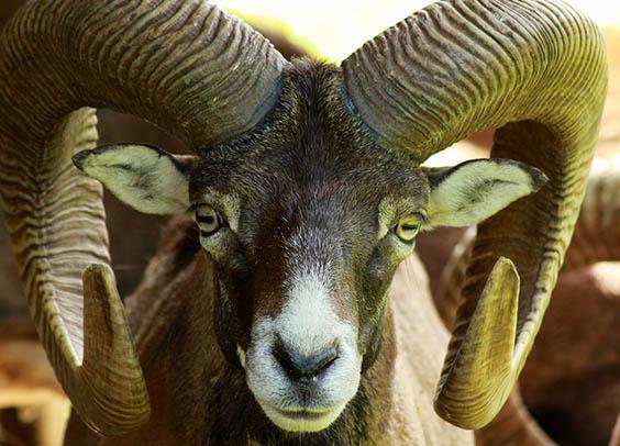 Красивые картинки животных - удивительные, прикольные, интересные 9