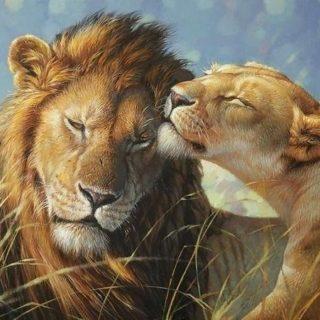 Красивые картинки львов и львиц - удивительные, прикольные и крутые 6