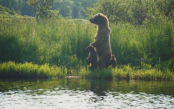 Медведица с медвежатами - красивые фото и картинки, удивительные 10