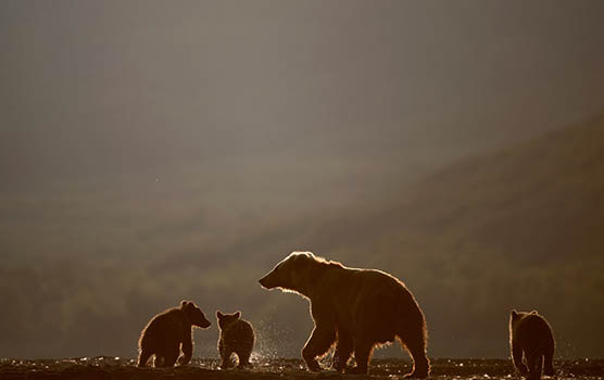 Медведица с медвежатами - красивые фото и картинки, удивительные 13