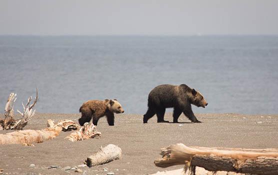 Медведица с медвежатами - красивые фото и картинки, удивительные 4