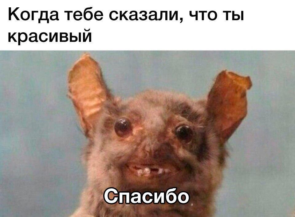Подборка смешных и ржачных картинок, фото - новые, свежие, 2017 1