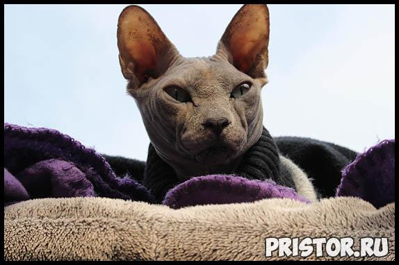 Самые известные породы кошек - топ 5 интересных и популярных пород 1