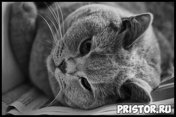 Самые известные породы кошек - топ 5 интересных и популярных пород 3