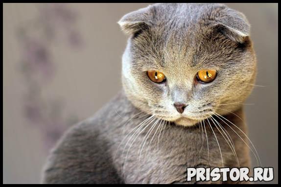 Самые известные породы кошек - топ 5 интересных и популярных пород 4