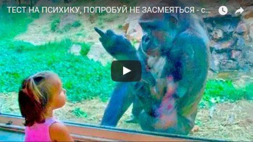 Смешные и ржачные видео приколы - новые, свежие, подборка №1