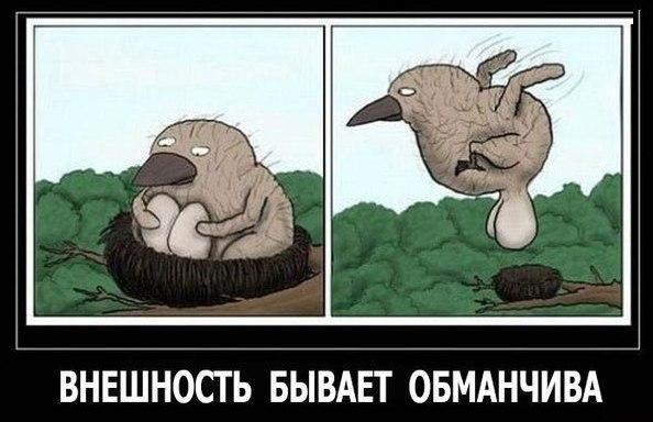 Смешные картинки до слез - очень прикольные, веселые и забавные 1