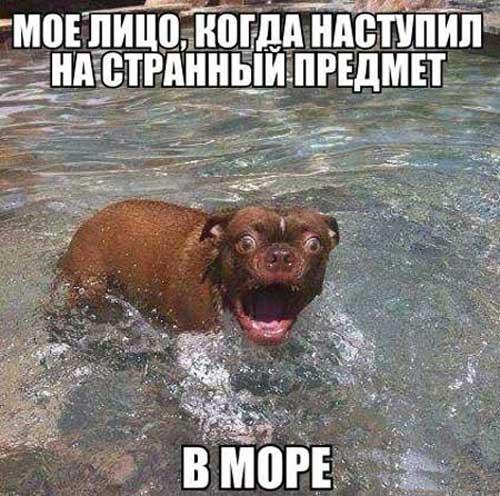 смешные картинки на море