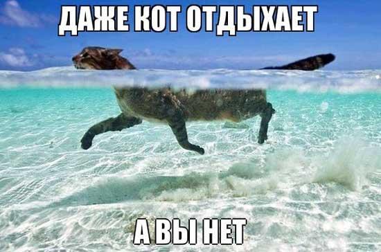 Смешные картинки про море - прикольные, ржачные и веселые 12