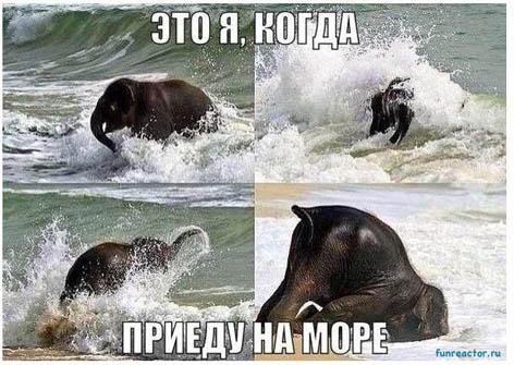 Смешные картинки про море - прикольные, ржачные и веселые 7