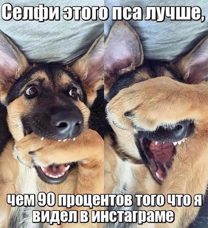 Смешные картинки про собак и котов - прикольные, веселые, забавные 10