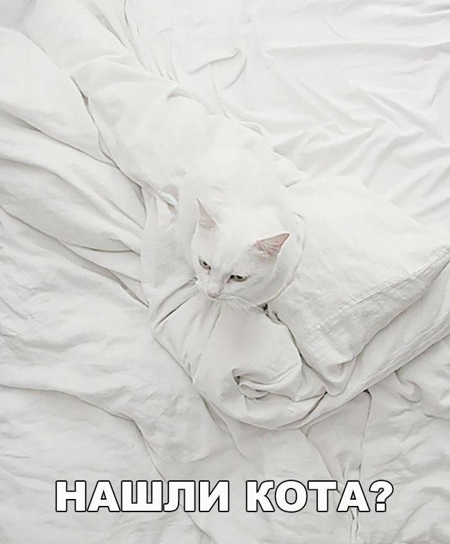 Смешные картинки про собак и котов - прикольные, веселые, забавные 14