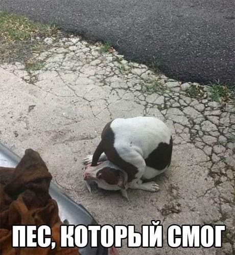 Смешные картинки про собак и котов - прикольные, веселые, забавные 3