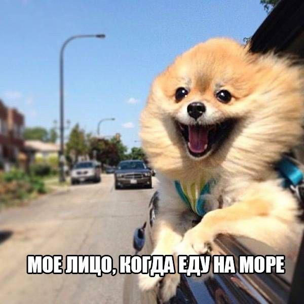 Смешные картинки про собак и котов - прикольные, веселые, забавные 4