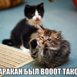 Смешные картинки про собак и котов - прикольные, веселые, забавные 7