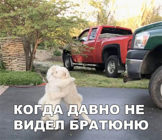 Смешные картинки про собак и котов - прикольные, веселые, забавные 8
