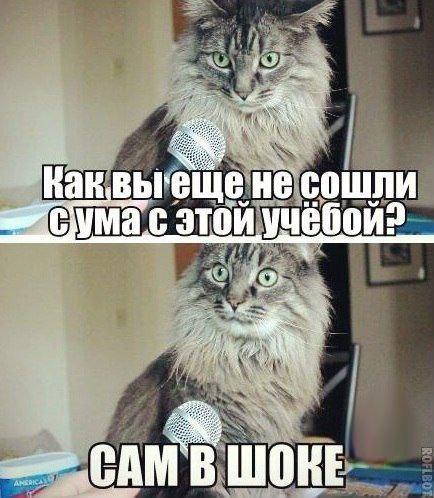 Смешные картинки про собак и котов - прикольные, веселые, забавные 9
