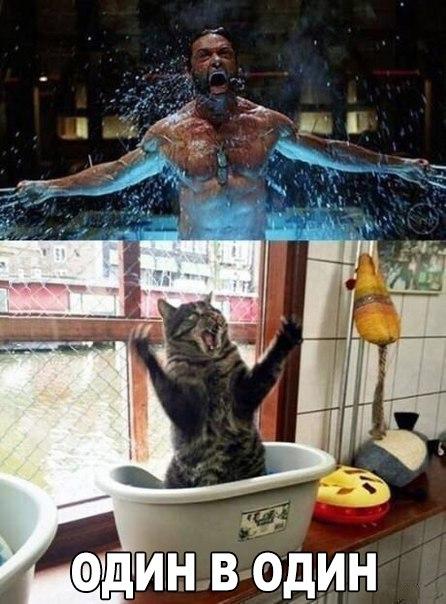 Смешные фото про кошек до слез - прикольные, ржачные и веселые 1