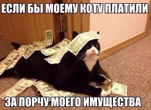 Смешные фото про кошек до слез - прикольные, ржачные и веселые 5