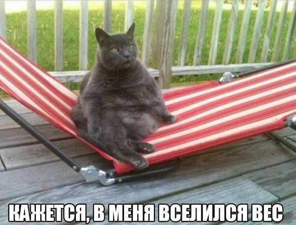 Смешные фото про кошек до слез - прикольные, ржачные и веселые 9