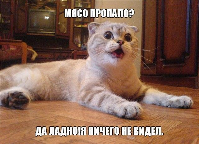 Веселые и смешные картинки о животных с подписями - смотреть 8