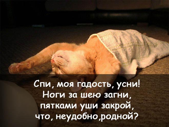 спокойной ночи смешные фото