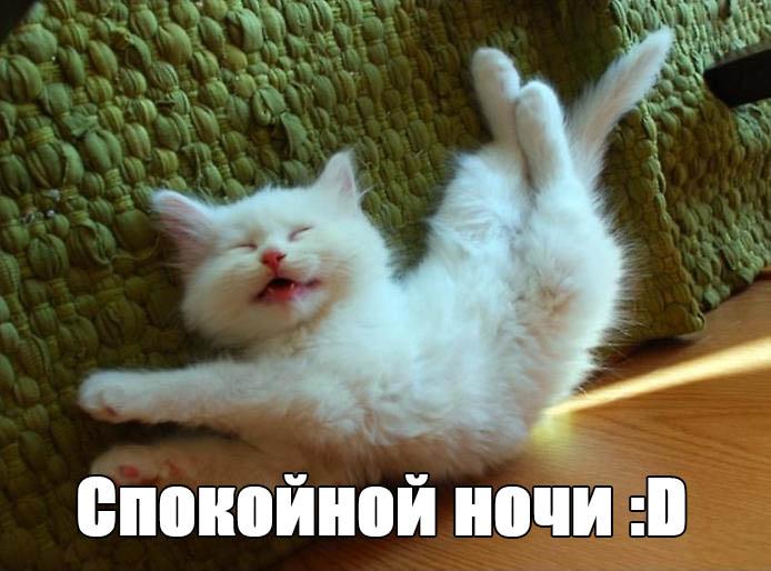Веселые и смешные пожелания спокойной ночи - скачать бесплатно 6