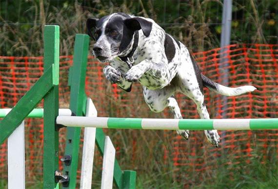 Как научить собаку прыгать через обруч - лучшие методы и способы 1