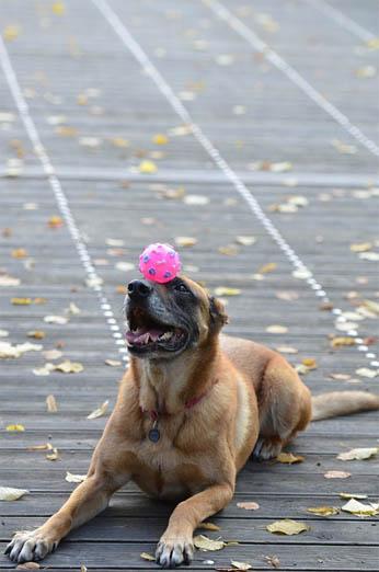 Как научить собаку прыгать через обруч - лучшие методы и способы 2