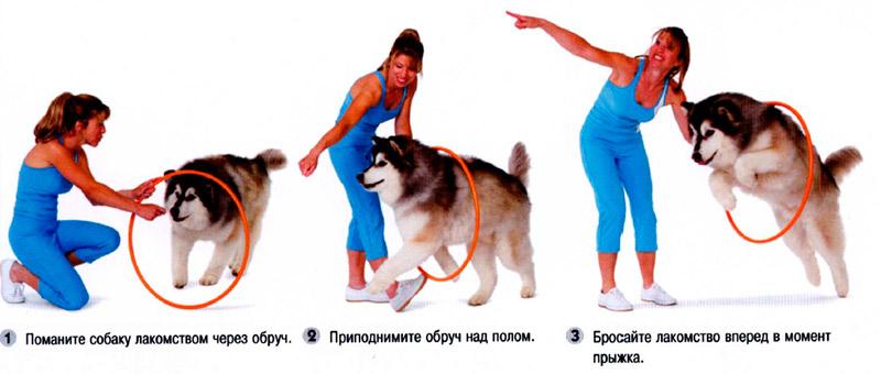 Как научить собаку прыгать через обруч - лучшие методы и способы 4