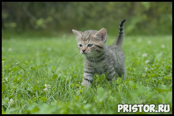 Как правильно выбрать котенка - основные советы и рекомендации 1
