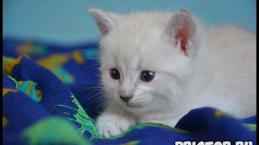 Как правильно выбрать котенка - основные советы и рекомендации 3