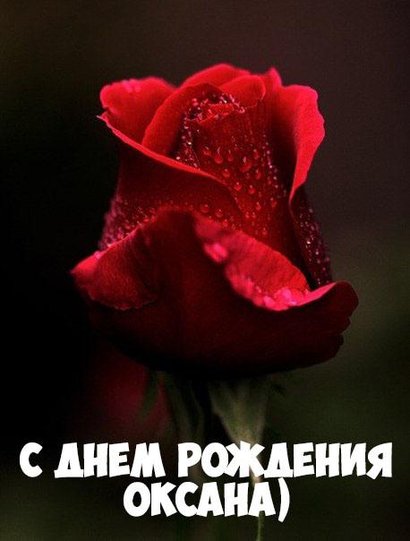 Картинки С Днем Рождения с именем Оксана - красивые и приятные 9