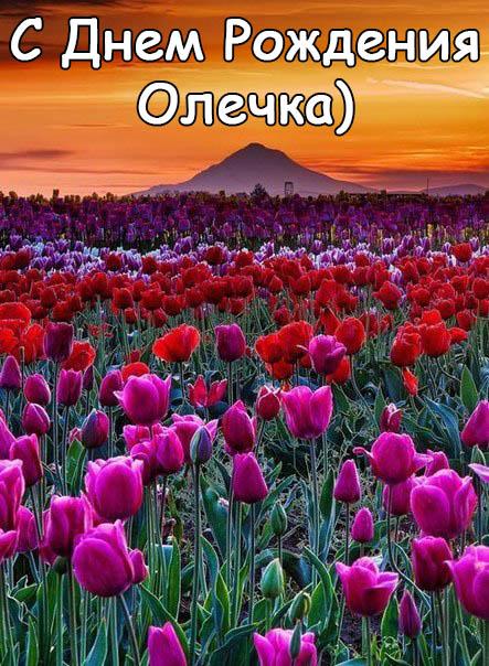 Картинки С Днем Рождения с именем Ольга - интересные и прикольные 8
