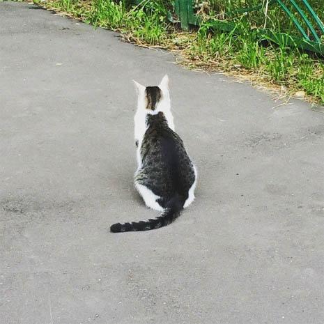 Картинки и фото интересных и необычных котов - смешные и веселые 1