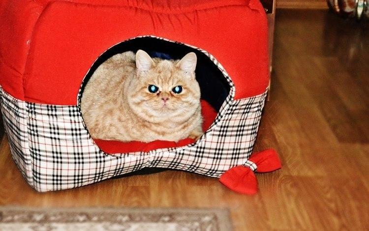 Картинки и фото интересных и необычных котов - смешные и веселые 13