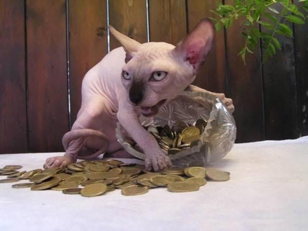 Картинки и фото интересных и необычных котов - смешные и веселые 4