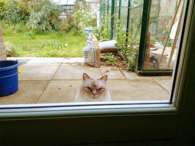 Картинки и фото интересных и необычных котов - смешные и веселые 5