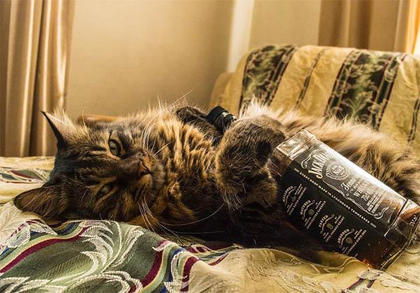 Картинки и фото интересных и необычных котов - смешные и веселые 6