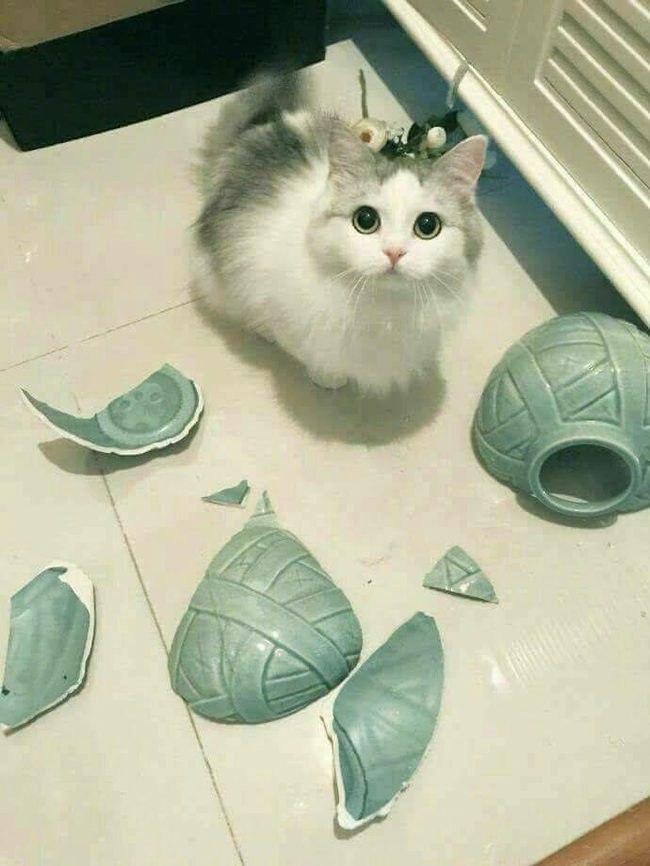 Картинки и фото интересных и необычных котов - смешные и веселые 7