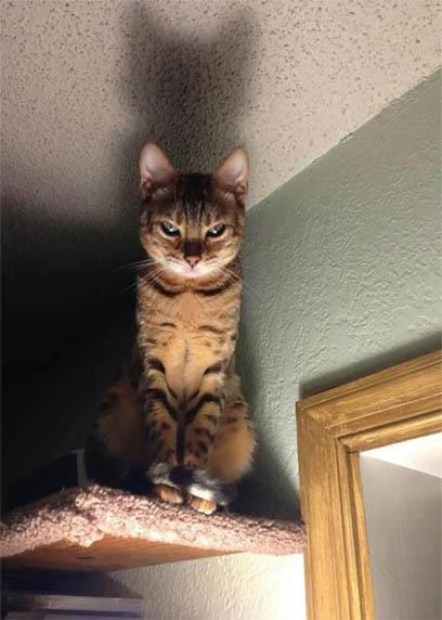 Картинки и фото интересных и необычных котов - смешные и веселые 8